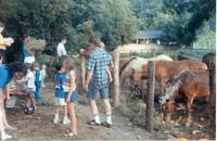 feedinghorses